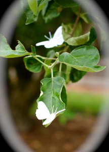 White butterfly decorations.