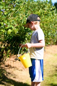 boy blueberry picking
