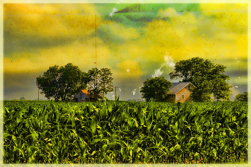 Little House in the Corn Field