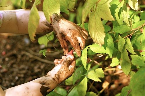 Permaculture: A Backyard Garden