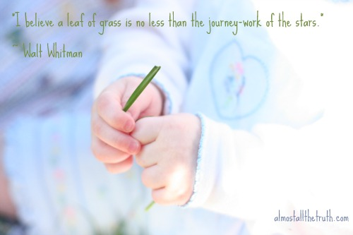 Almost All The Truth - A Leaf of Grass