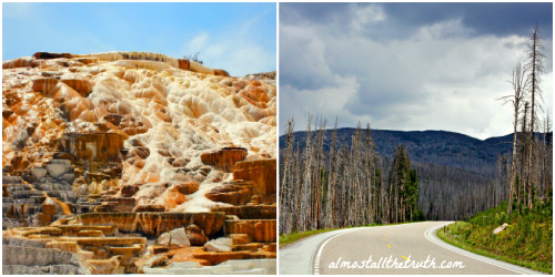 Almost All The Truth - Natural Change in Yellowstone