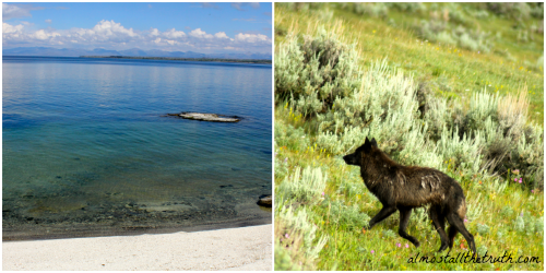 Almost All The Truth - Wolves and Yellowstone Lake