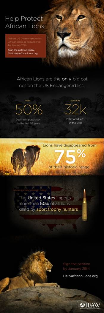 Endangered Lions Infographic