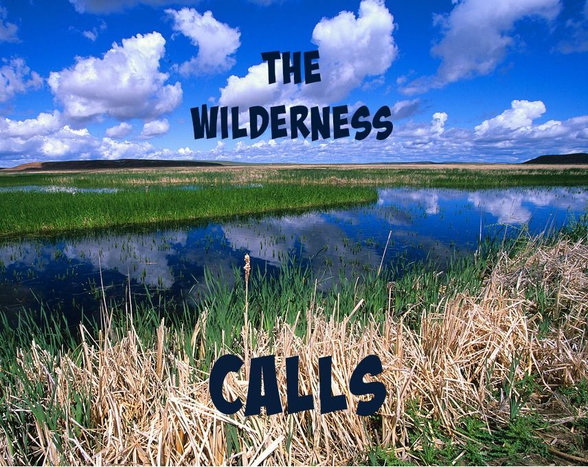 Almost All The Truth - Wilderness Calls